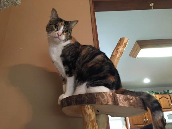kaparó és játékfa macskáknak