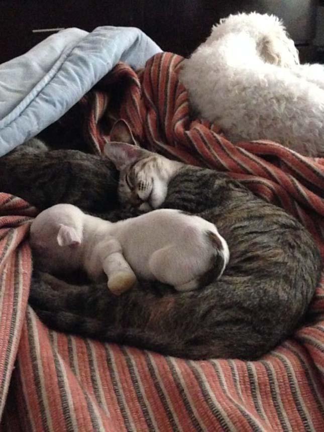 Macskák fogadták be a súlyosan megsérült kiskutyát