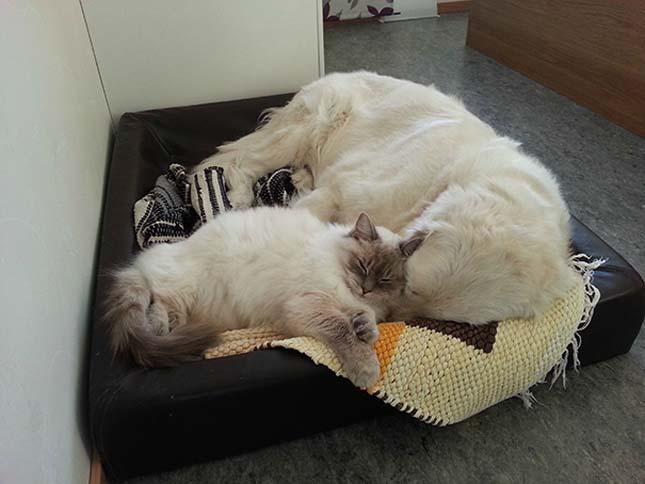 kutyak-es-macskak-14