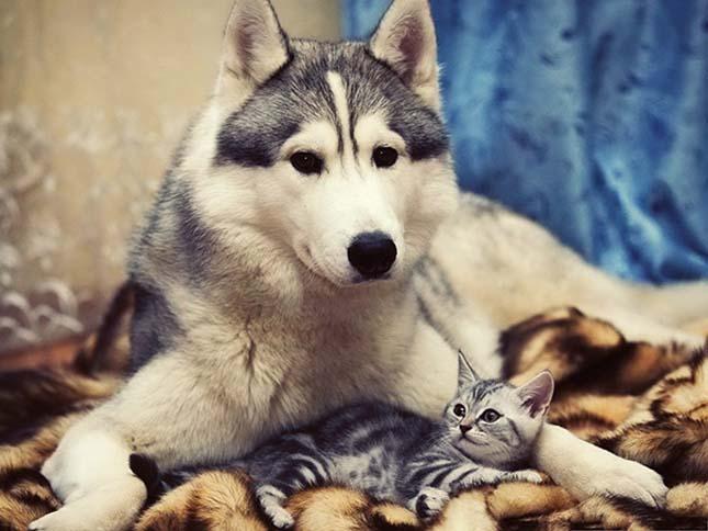 kutyak-es-macskak-27