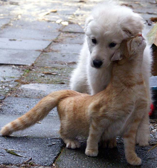 kutyak-es-macskak-8
