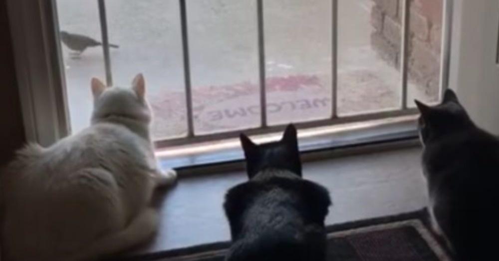 macskak-megijednek