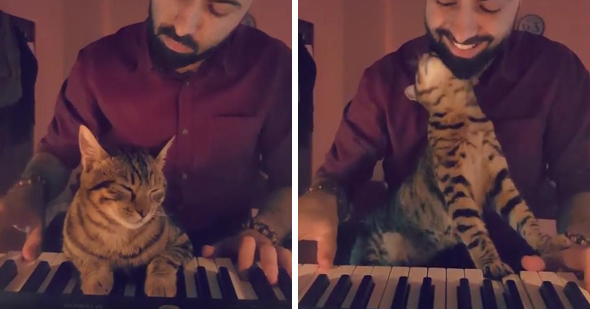 zongorazo