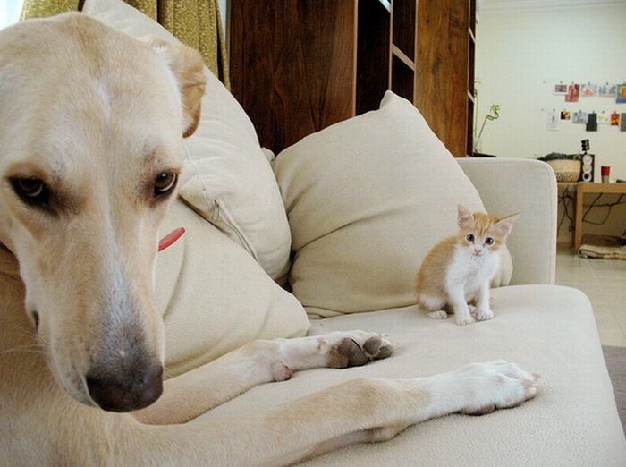 Pictures Of Cats And Dogs Photobombing Each Other Photobombs with animals are even funnier than those with people. ©Exclusivepix Media