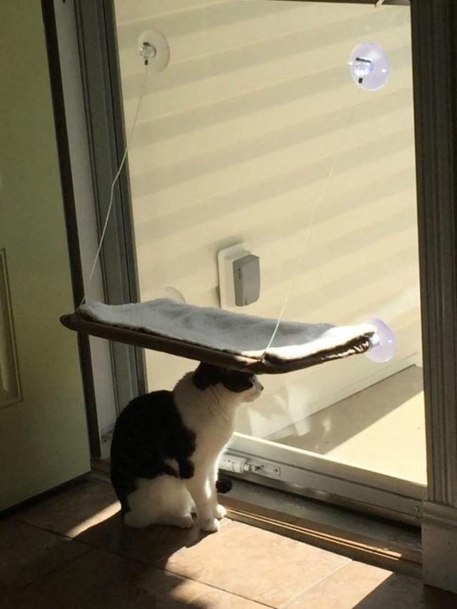 Tökéletesen időzített macskás képek | Imádom a Macskám