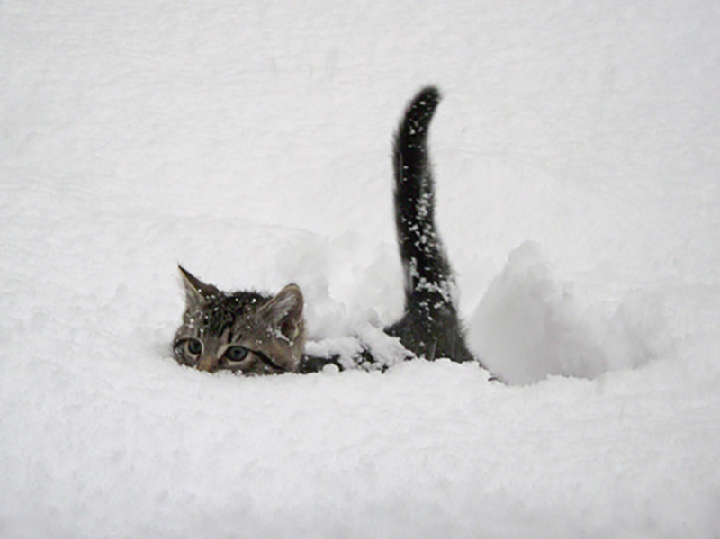 "Steve Wertman phone: story idea: Snow is so deep in Mission, you need a ""Snowcat"" !"