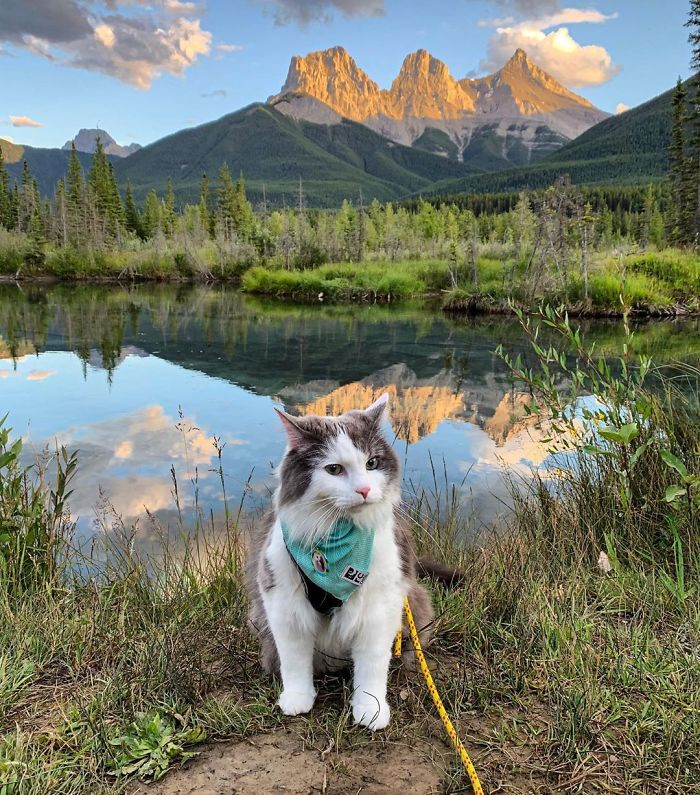Mire vadásznak a macskák? | Imádom a Macskám