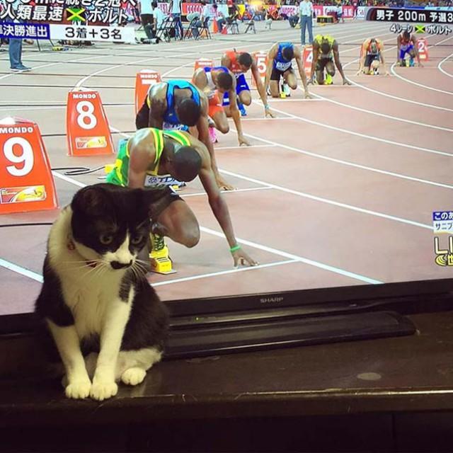 6 fotó, amelyet csak a macskagazdik érthetnek igazán