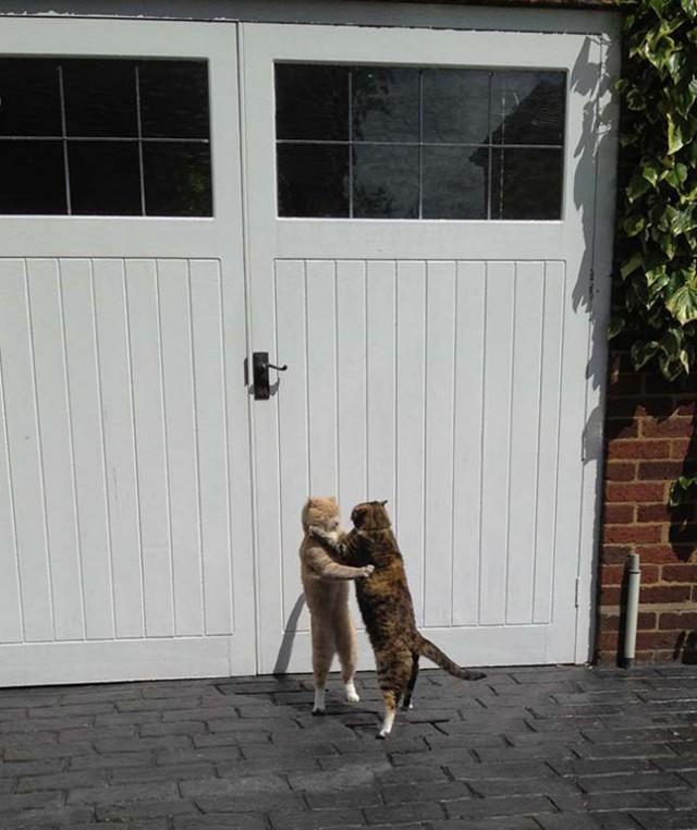 9 macsek, aki sikeresen megszabadult a fölösleges kilóktól