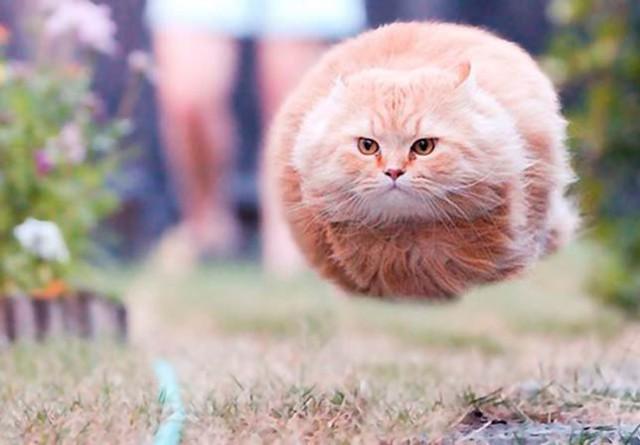 30 vidám pillanatkép a macskatartók életéből | Imádom a