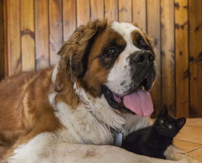 kutyak-es-macskak-24