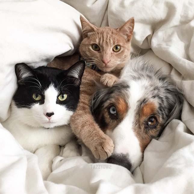 kutyak-es-macskak-25
