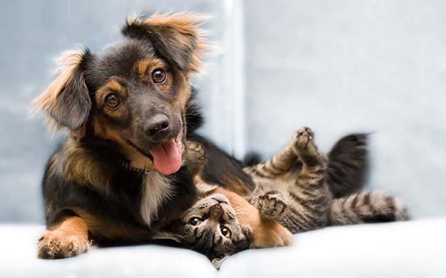 kutyak-es-macskak-33