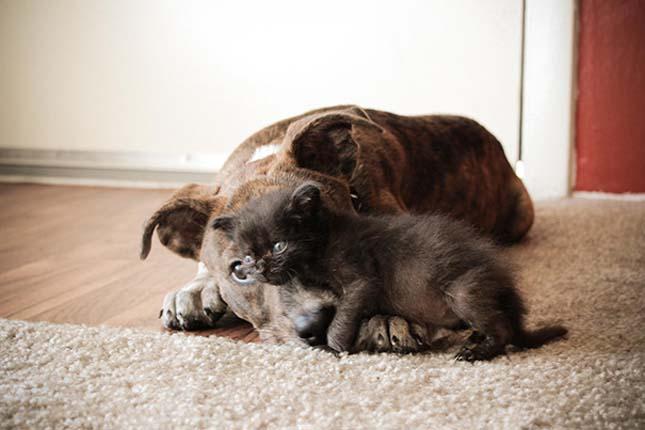 kutyak-es-macskak-34
