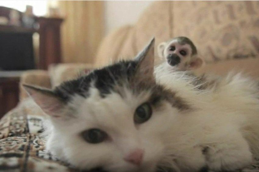 macskamajom