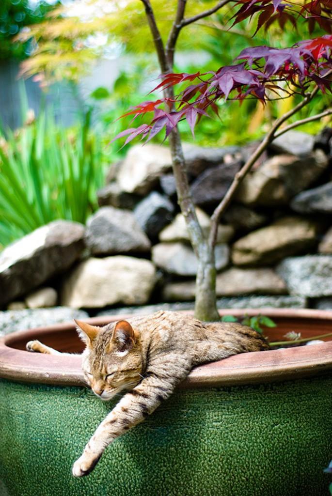 Négy évszakon keresztül követte végig macskája kalandját