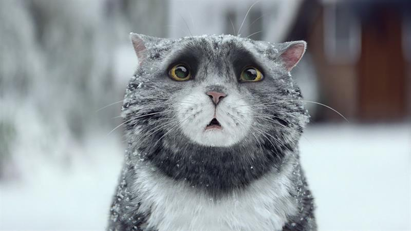 kis-macska-nagy-zurzavar