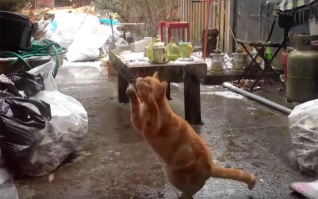 macska-es-ho