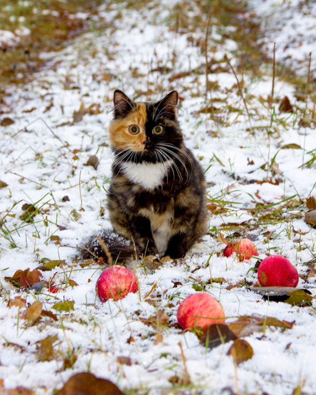 21 bájos fotó virágcserepekben pihenő macskákról | Imádom