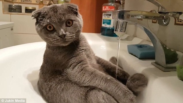 zuhanyzo