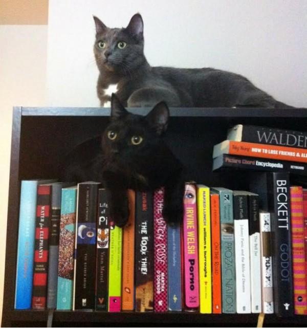 A videochatelő macskák garantáltan feldobják a hangulatod