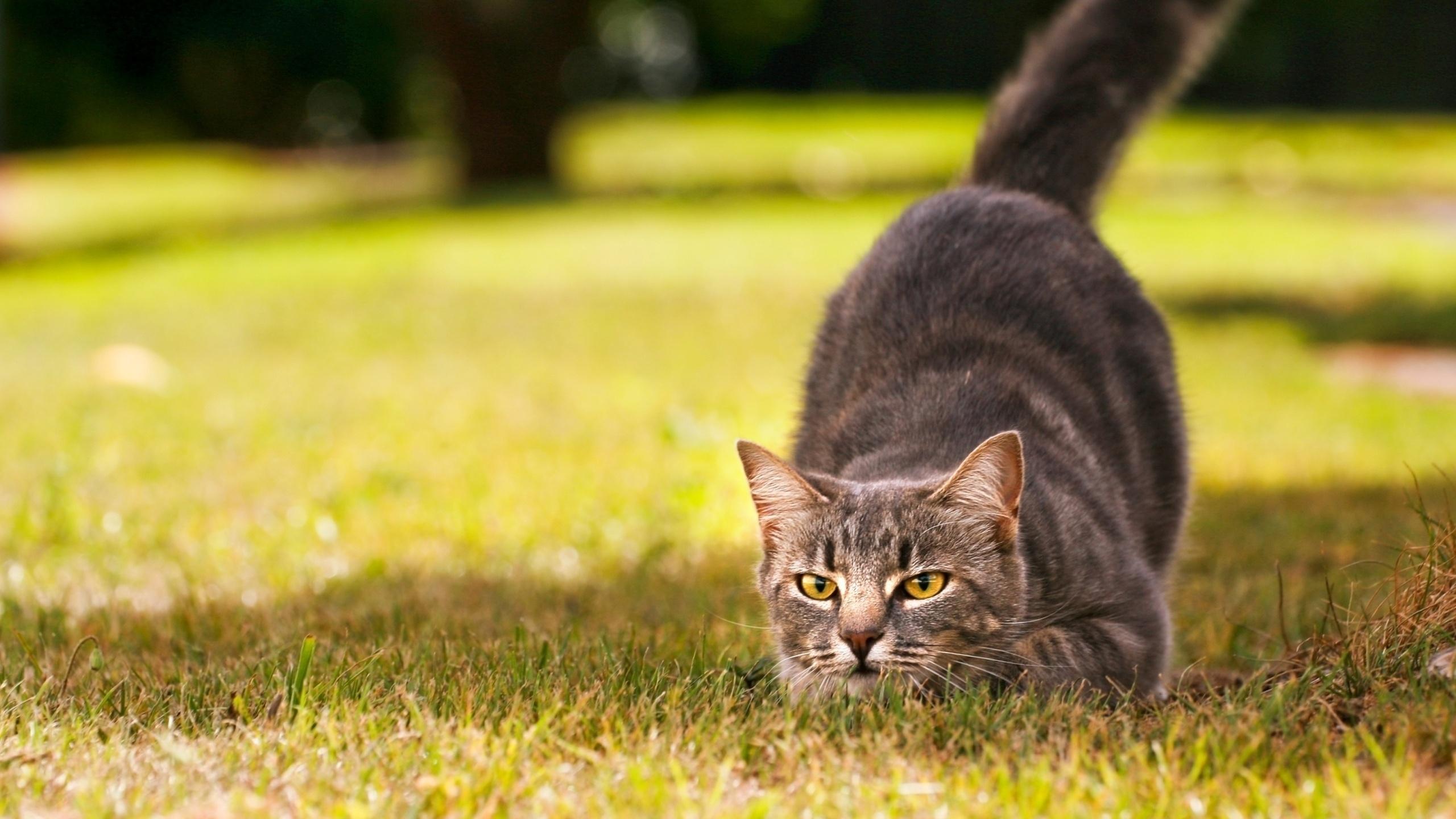 vadaszo-macska
