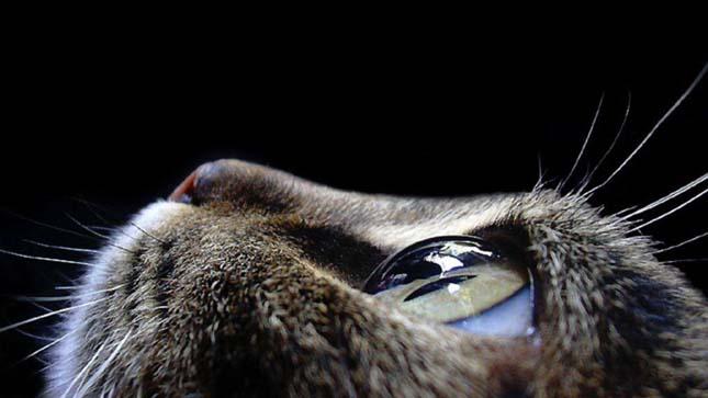 látás emberi macska